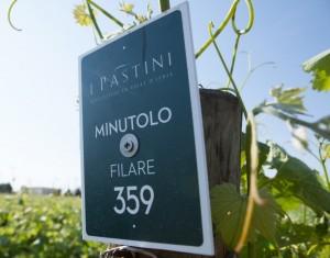 I Pastini 1